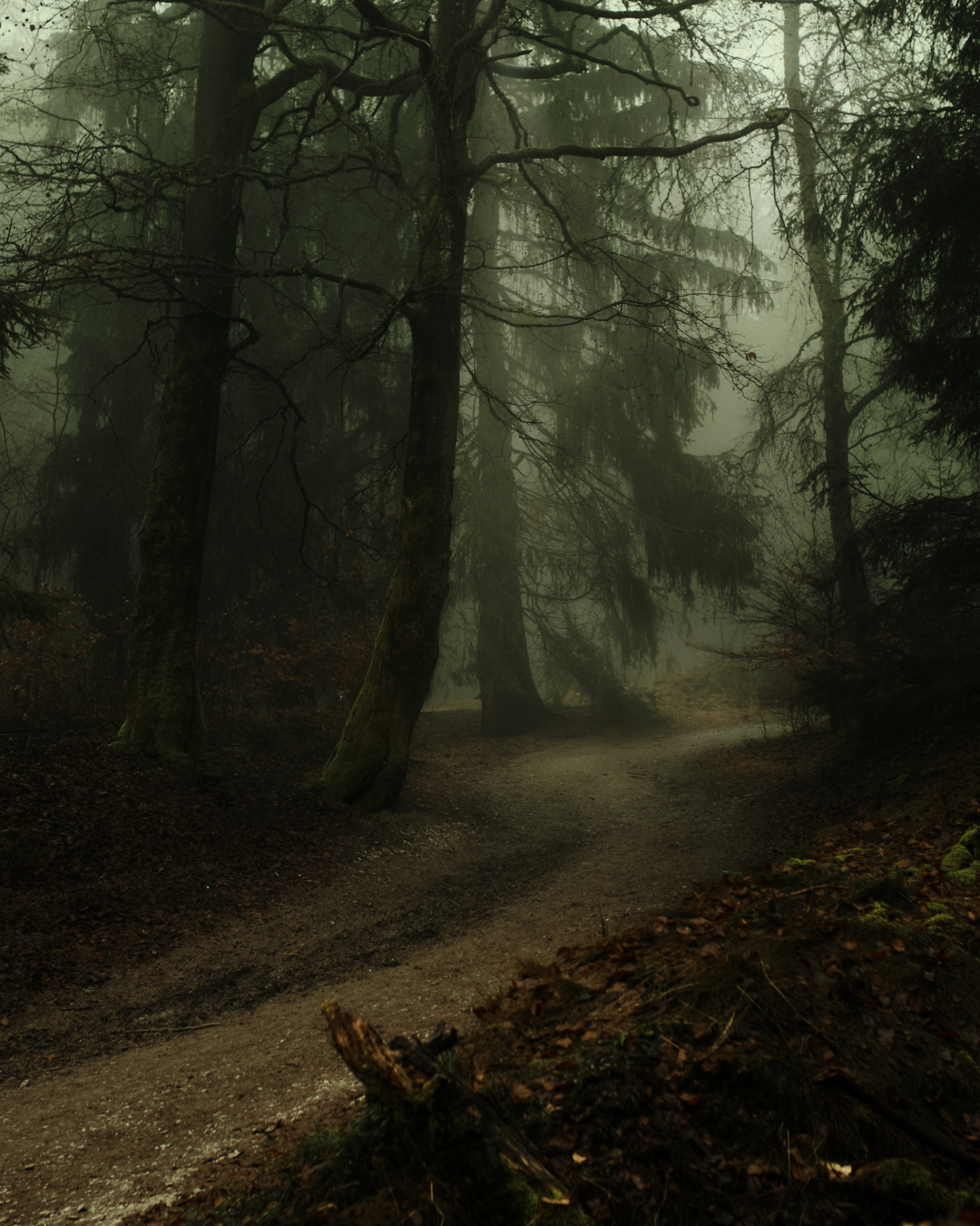 Cover picture of product Foggy Forrest Fotoprint 40 x 60 cm